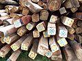 Tibetan building materials - panoramio.jpg