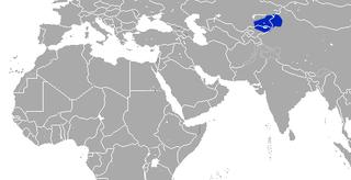 Tien Shan shrew Species of mammal