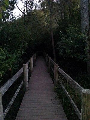 Tilden Regional Park - Boardwalk trail along Wildcat Creek in Tilden Regional Park