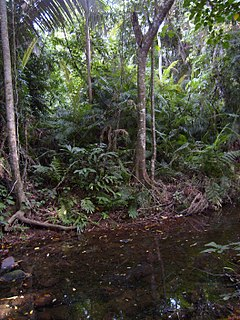 Jungle an impassable dense forest (typically tropical)