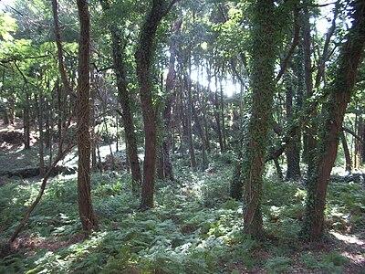 Tipo de vegetación en las Islas Cíes 2.jpg