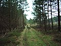 Track in Nelsonhill Wood - geograph.org.uk - 335001.jpg