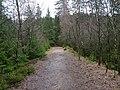 Trail at Silberteich 04.jpg