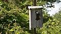 Tree Swallows (Tachycineta bicolor) - Guelph, Ontario.jpg