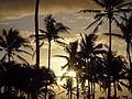 Tropical Fantasy.JPG