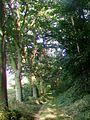 Trumilly (60), chemin rural sur le flanc sud du mont Cornon.jpg