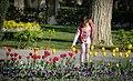 Tulip flowers in Tehran's parks, Nowruz 2018 (13961228001128636570940672599713 7100).jpg