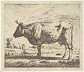 Two Cows and a Sheep, from Different Animals MET DP828092.jpg