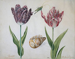 Two Tulips, a Shell and an Insect.jpg