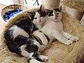 Two littermates cuddling 01.jpg
