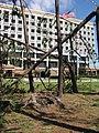 US Navy 040920-N-4202D-011 Trees broken by Hurricane Ivan lay in front of Naval Hospital Pensacola, Fla.jpg