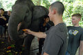 US Navy 080819-N-4005H-078 Sailors assigned to the Nimitz-class aircraft carrier USS Ronald Reagan (CVN 76) feed an elephant at the Kuala Gandah Elephant Sanctuary.jpg