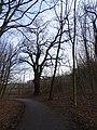Uhříněves, hraniční dub u obory.jpg