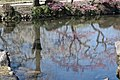 Ume Reflections One (142022795).jpeg