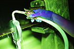 Under the light 140618-Z-NI803-027.jpg