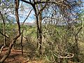 Unnamed Road, Swaziland - panoramio (4).jpg