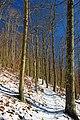 Uphill Climb (1) (8304226087).jpg