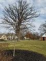 Upper Arlington, Ohio (32334280056).jpg