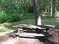 Upper Pine Bottom State Park Picnic 2.jpg