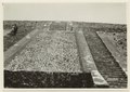 Utgrävningar i Teotihuacan (1932) - SMVK - 0307.a.0027.tif