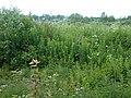 Valdaysky District, Novgorod Oblast, Russia - panoramio (367).jpg