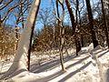 Valley Trail - Flickr - treegrow (1).jpg