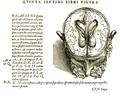 Vesalius 609c.png
