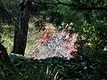 View from Bridge of Reflection in Trellinoe Gardens.jpg
