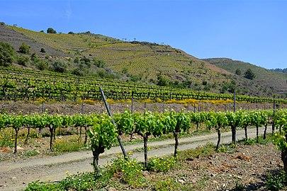 Vinyes de Porrera, Priorat , Primavera.jpg
