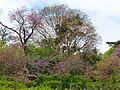 Vue du Jardin des Plantes au printemps.JPG