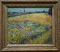 WLANL - arts of akki - Korenveld, Vincent van Gogh (1888).jpg