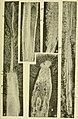 Walcott Cambrian Geology and Paleontology II plate 18.jpg