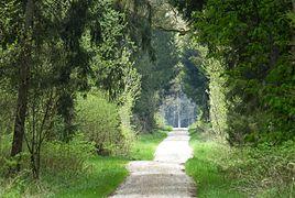 Wald bei Mödishofen 04.jpg
