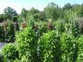 Warsaw. Powsin. Botanical Garden 206.JPG