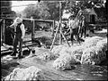 Washing wool from The Powerhouse Museum Collection.jpg