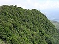 Well developed tropical evergreen forest looks lush in the early wet season, Mt Manucoco, Atauro, 24 Dec 2003.jpg
