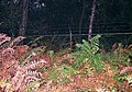 Western boundary fence of Center Parcs holiday village - geograph.org.uk - 66504.jpg
