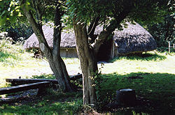 Circular thatched building seen through trees