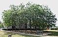Wien Trygve-Lie-Park Lederhülsenbäume Ivg67.jpg