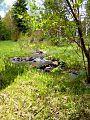Winding Birch Creek, UT Landscape.jpg