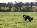 Winscombe Field - geograph.org.uk - 1092776.jpg