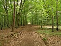 Wolin National Park-path.jpg