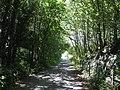 Wooded stretch of the Mawddach Cycle Trail - geograph.org.uk - 1374220.jpg