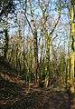 Woodland by embankment - geograph.org.uk - 394002.jpg
