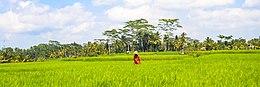 Wv Ubud banner.jpeg