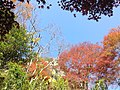 Yabakeimachi Oaza Shinyaba, Nakatsu, Oita Prefecture 871-0422, Japan - panoramio (19).jpg