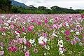Yakushima waterfalls (4485969978).jpg