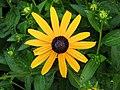 Yellow flower - panoramio.jpg