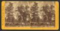 Yosemite Falls, 2630 feet, Yosemite Valley, Mariposa County, Cal, by Watkins, Carleton E., 1829-1916.png