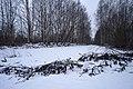 Yuntolovsky Reserve in December.jpg